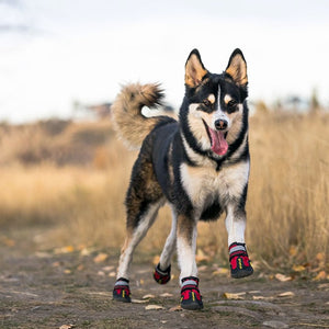 Why Your Dog Should Wear Shoes