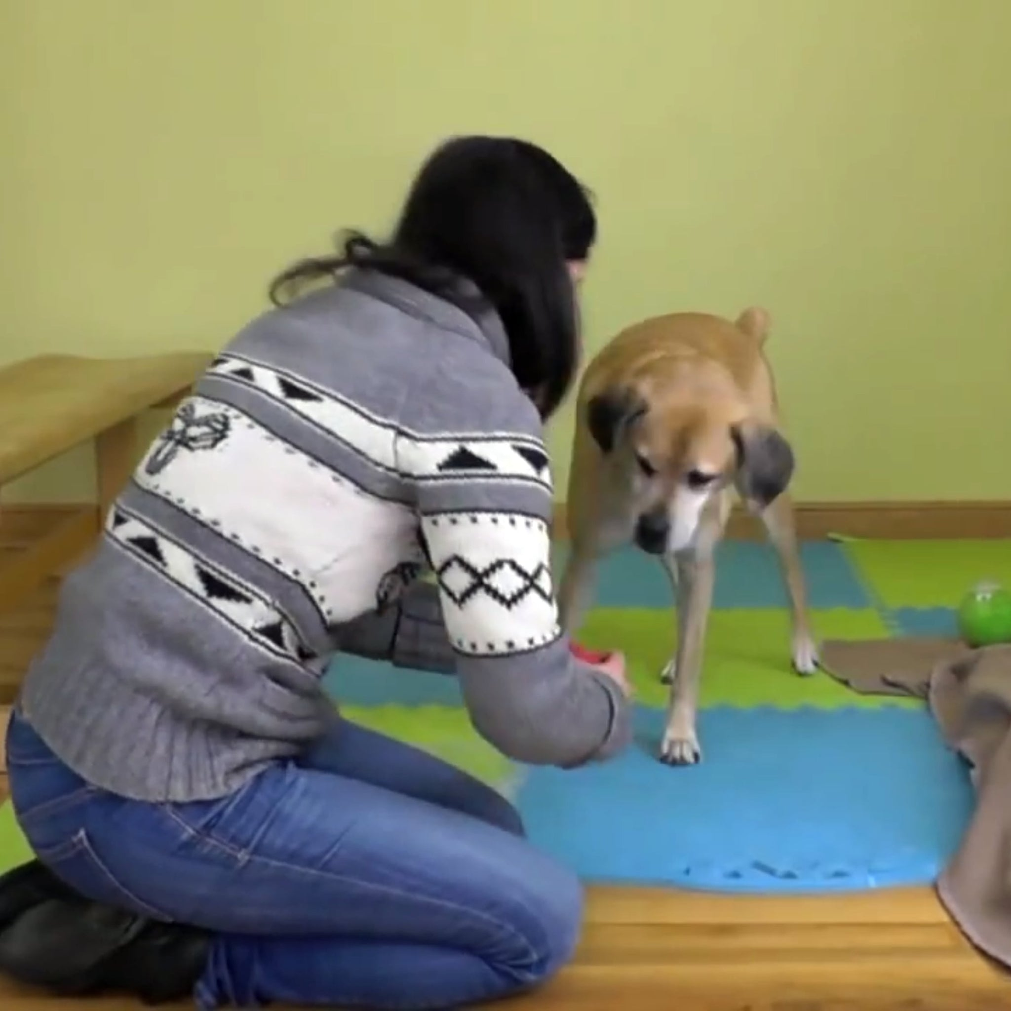 How This Woman Keeps Her Dogs Busy for Hours