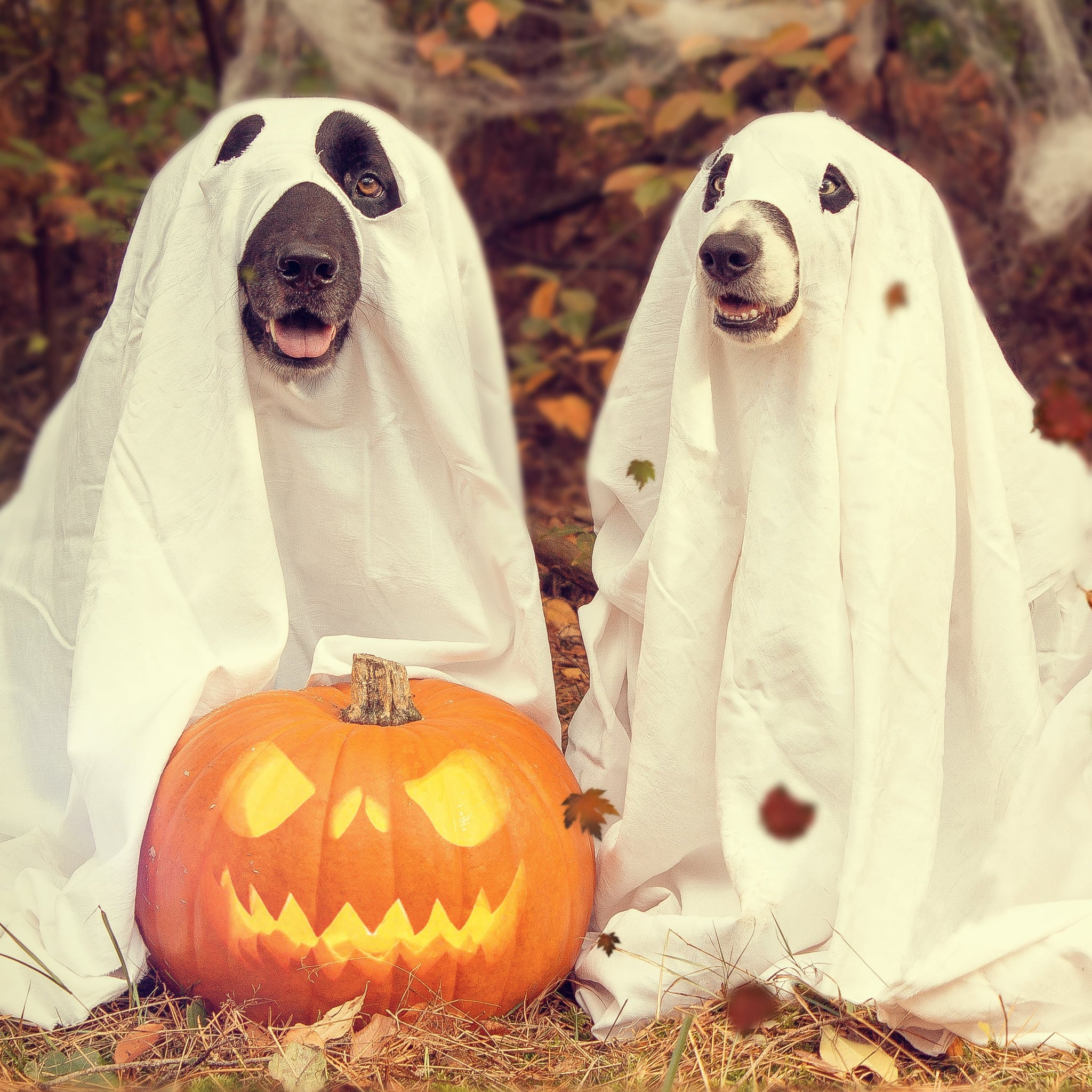 Keeping Your Dog Safe This Halloween