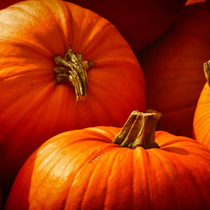 Pumpkinlicious – A Treat for Your Dog