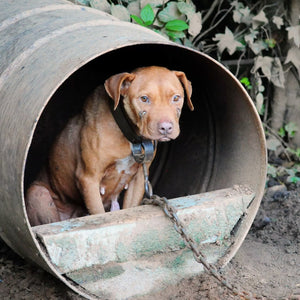 Dog Fighting: Are We in the Dark Ages?