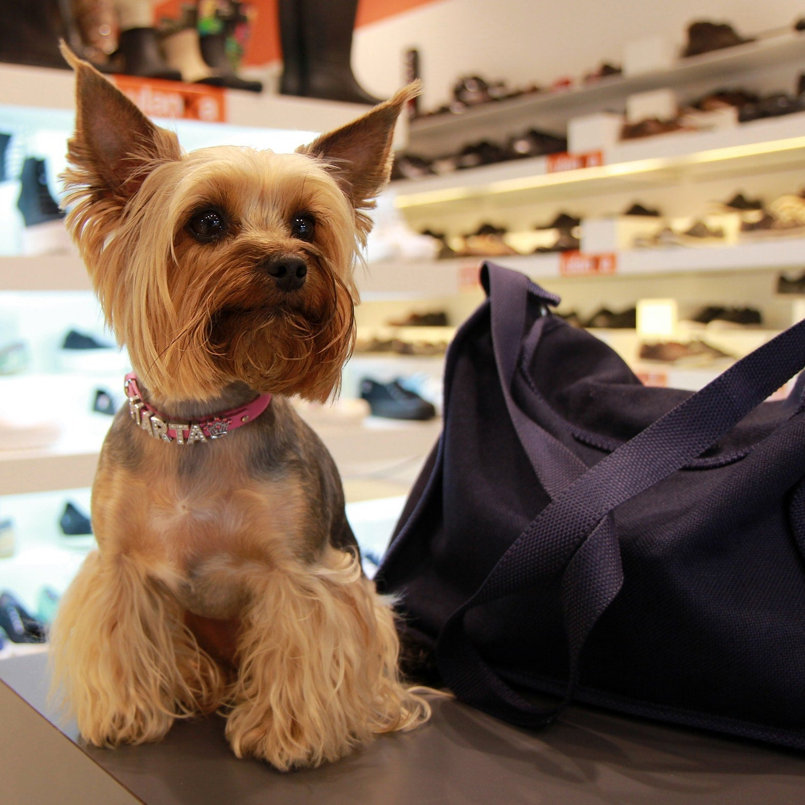 Q&A: Will BarkWise Collars Fit My Small, 5-Pound Dog?