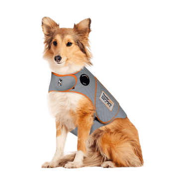 ThunderShirt® Sport Platinum – Large on a Border Collie