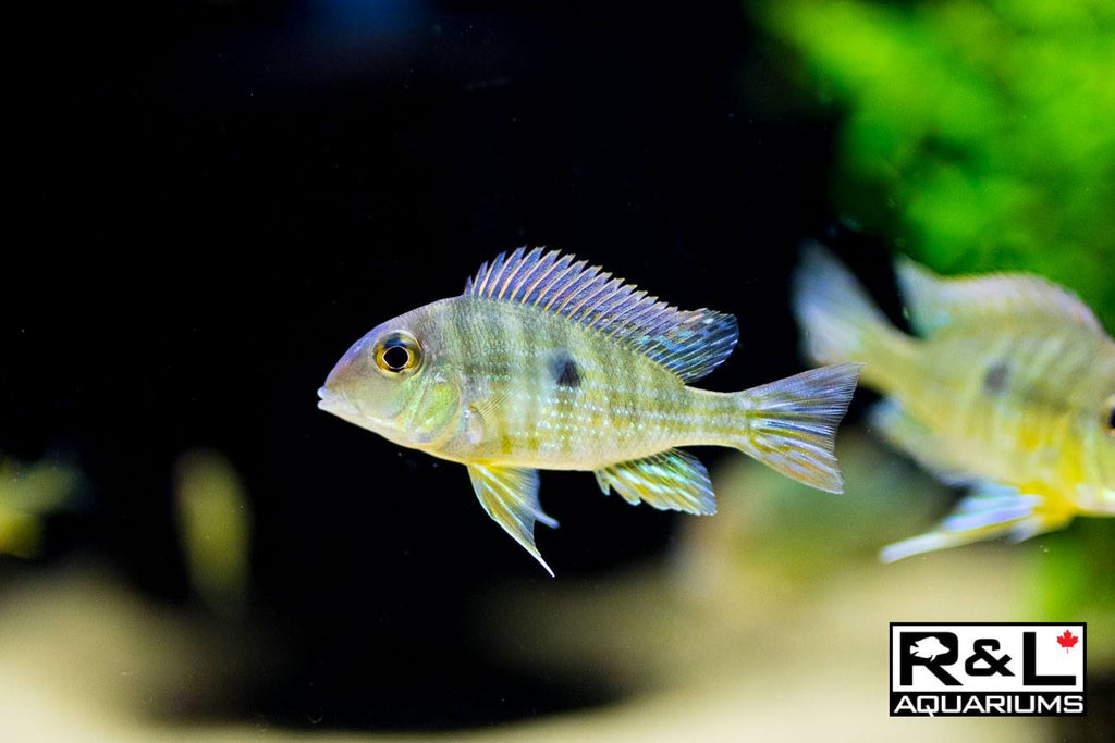 F.O.W. Fish of the Week! August 20, 2018