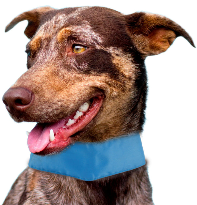 Summer-Cooling' Insertable And Adjustable Cooling Ice Pack Dog Neck Wrap - US │ The World Of Giulio Pet Supplies & Products