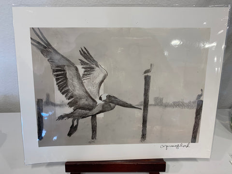 "11X14 Print- ""Study of the Flying Pelican"" - 318 Art and Garden"