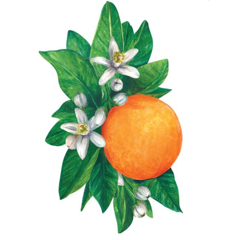 orange blossom: table accent
