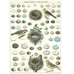 Birds, Eggs, and Nests Poster