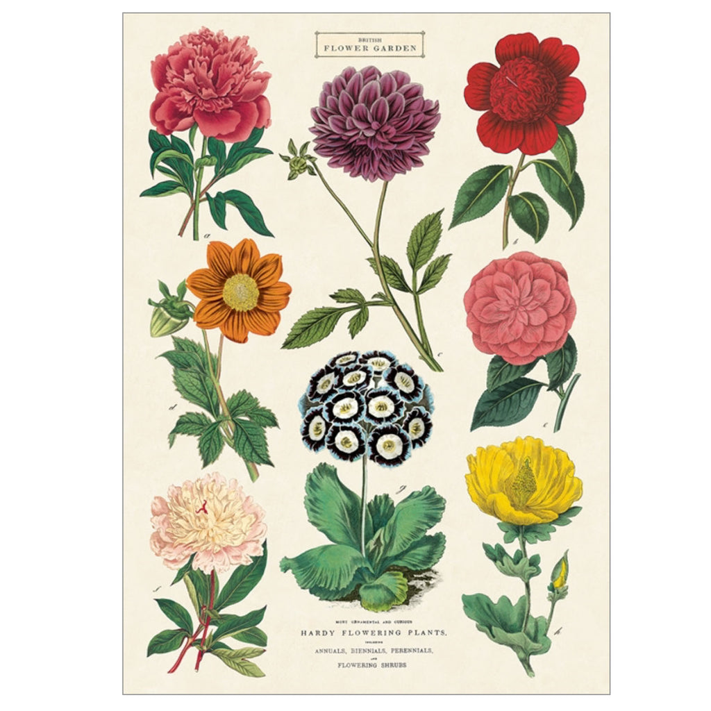 British Flower Botanica 2 Poster