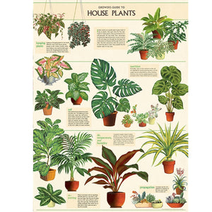 House Plants Poster