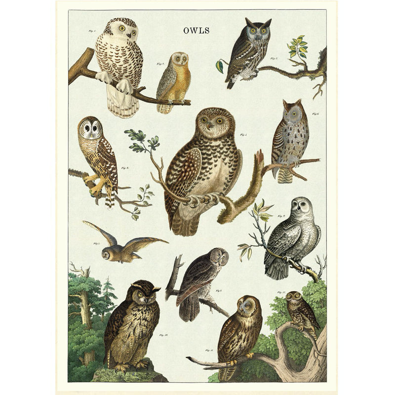Owl Chart Poster