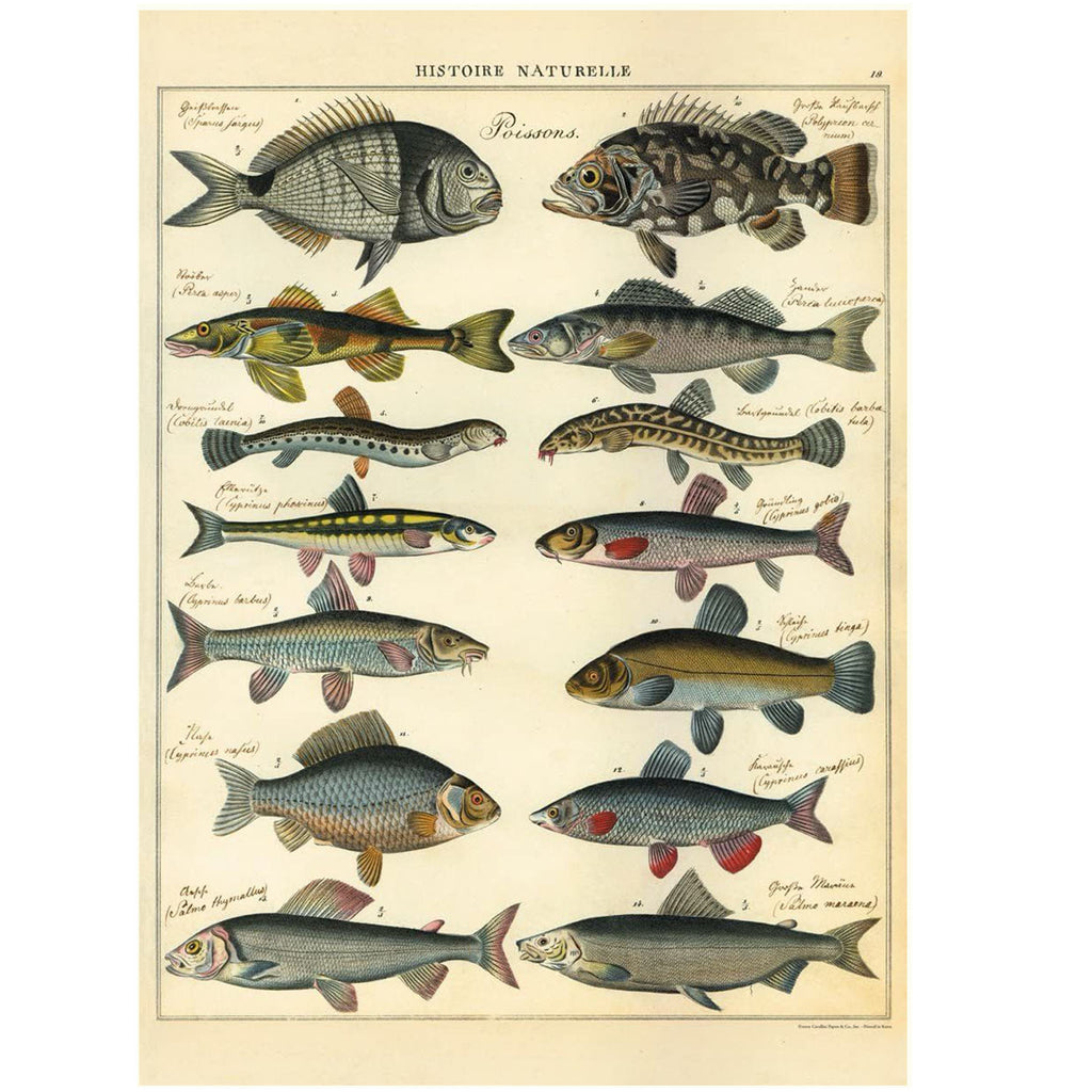 Natural History Fish  Poissons Poster