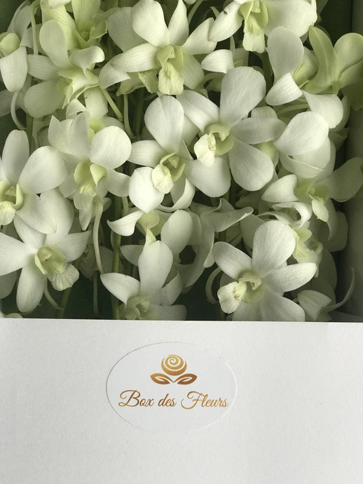 Montagne Blanche_white_orchids_box des fleurs_baby shower_its a girl_ gifts foe her_baby girl_ mothers day_mother's day_ gift_ flowers_ vancouver_canada_easter flowers_ rare flowers_ gift foe her_ its a boy_ baby boy_ baby shower_ gift luxury_wedding flowers