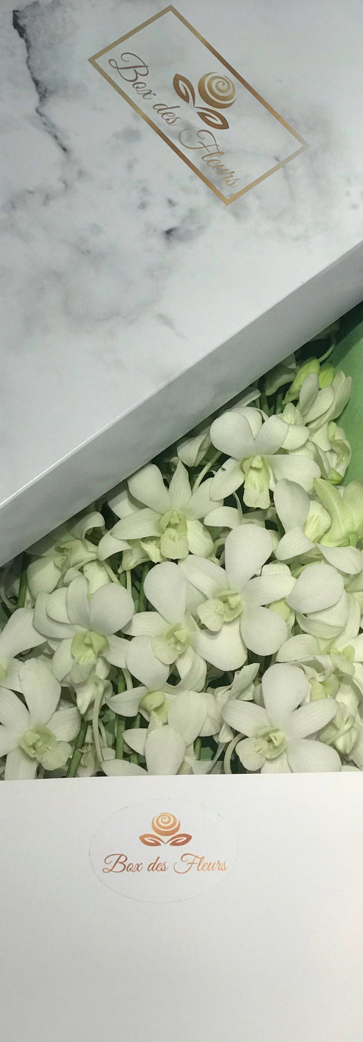 Montagne blanche box des fleurs montagne blanchewhiteorchidsbox des fleursbaby showerits a girl gifts foe herbaby girl mothers daymothers day gift flowers negle Image collections