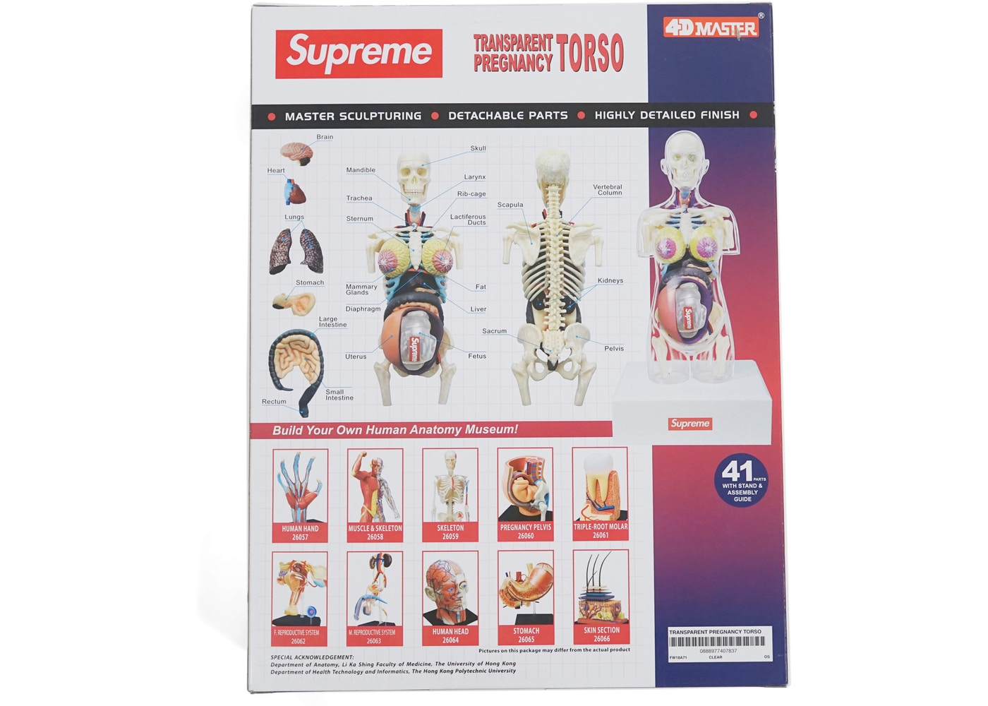 Supreme Female Anatomy Model Clear Basementhk