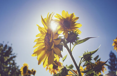 "<h1>Vitamin D and Coronavirus - Is There More to This ""Sunshine"" Supplement?</h1>"