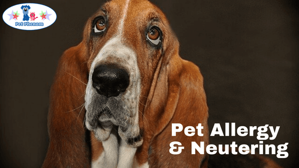 Pet Allergy & Neutering