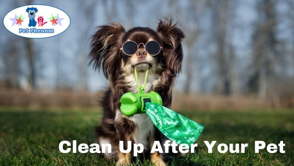 Clean Up After Your Pet