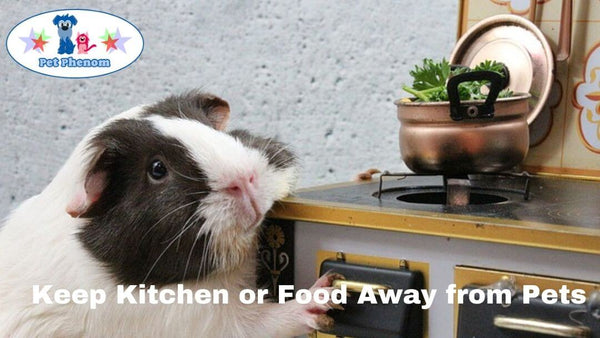 Keep Kitchen or Food Away From Pets