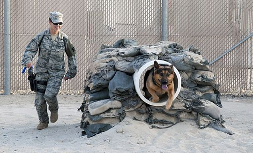 Dog Training in the Military