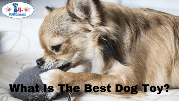 What Is The Best Dog Toy?