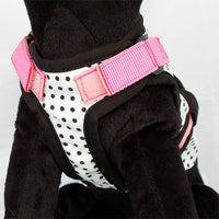 26 Bars & a Band Avant Garde Harness - Couture Princess -Medium (#26AGH-CPMD)-Dog-26 Bars & a Band-PetPhenom