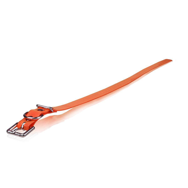 "Dogtra Extra Dog Collar Strap Orange 1"" x 30""-Dog-Dogtra-PetPhenom"