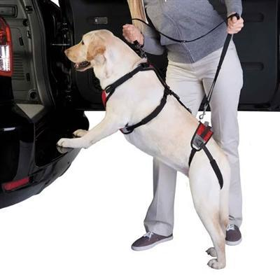 Total Pet Hlth™ Total Pet Hlth™ Lift & Go Lds - Red -X-Large-Dog-Total Pet Health-PetPhenom