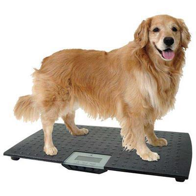 Master Grooming & Equipment Precision Digital Pet Scale -Large-Dog-Master Grooming & Equipment-PetPhenom