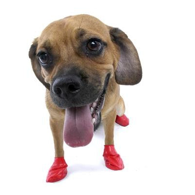 "PawZ Dog Boots PawZ - Red - Small - up to 2.5""-Dog-PawZ Dog Boots-PetPhenom"