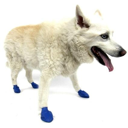 "PawZ Dog Boots PawZ - Blue - Medium - up to 3""-Dog-PawZ Dog Boots-PetPhenom"