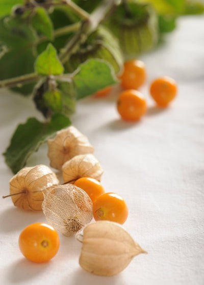 Physalis peruviana or Cape gooseberry.jpg