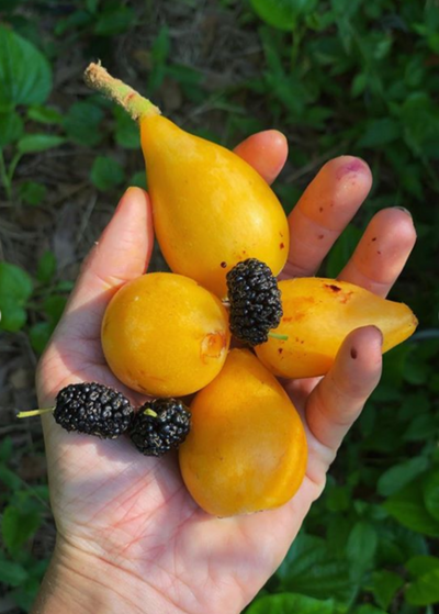 Rare Fruiting & Medicinal Food Forest Tour | Saturday, February 8th