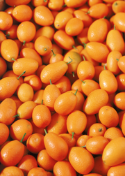 Meiwa Kumquat (Citrus crassifolia 'Meiwa')