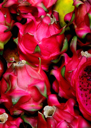 Dragon Fruit, Red 'Tricia' (Hylocereus polyrhizus)