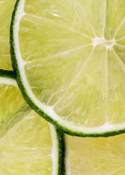 Key Lime (Citrus × aurantiifolia)