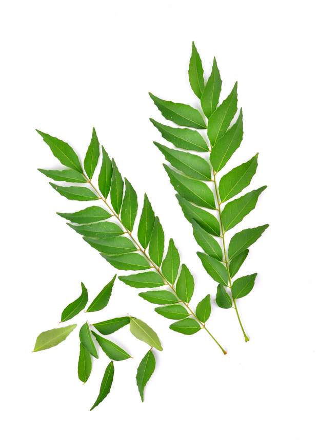 Curry Leaf, Kadi Patta (Murraya koenigii)