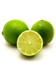 Persian Lime (Citrus × latifolia)