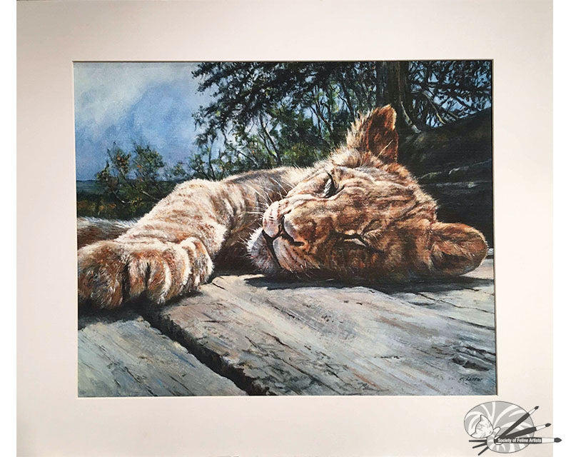 Young Lion Basking - Limited Edition Print