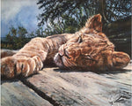 Load image into Gallery viewer, Young Lion Basking - Limited Edition Print