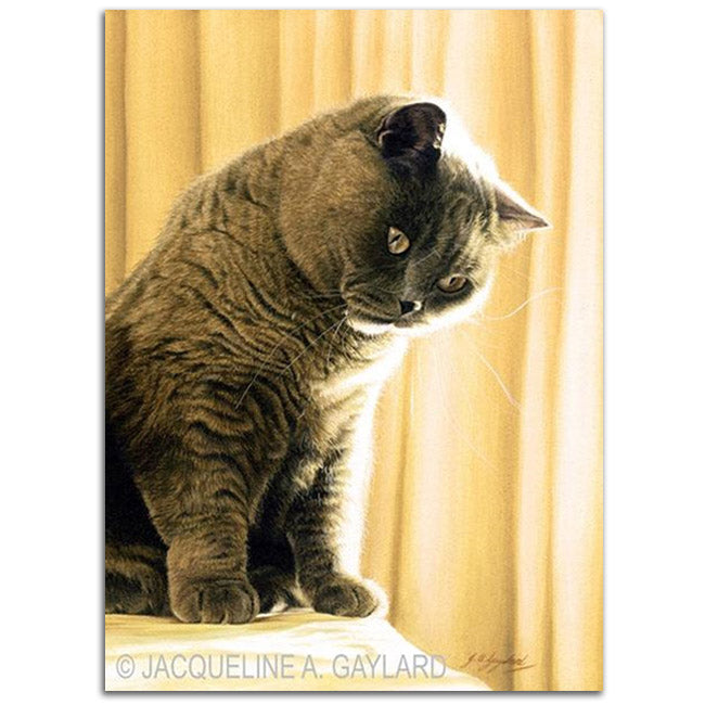 'Shine Bright' British Shorthair Blue Cream
