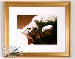 Load image into Gallery viewer, 'A Ray of Sunshine' British Shorthair Blue Cream