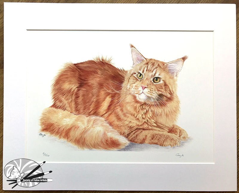 Big Red - Maine Coon Cat Limited Edition Print