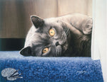 Cyan on the Stair - British Shorthair Cat Open Edition Print