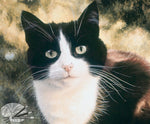 Load image into Gallery viewer, Jess - Tuxedo Cat Open Edition print