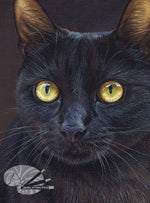Load image into Gallery viewer, Golden Eyes - Black Cat Limited Edition Print