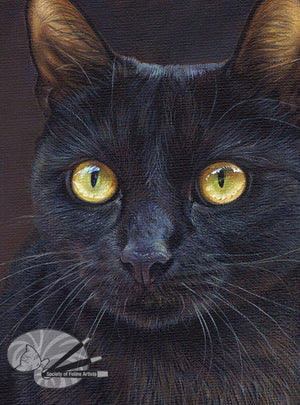 Golden Eyes - Black Cat Limited Edition Print