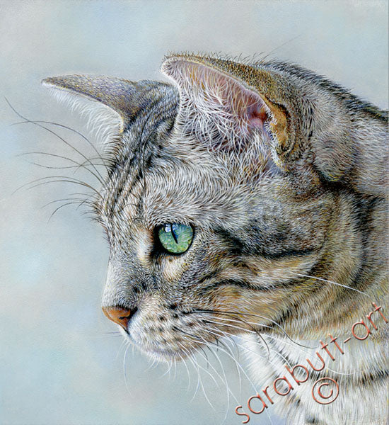Silver - Bengal Cat Limited Edtion Print