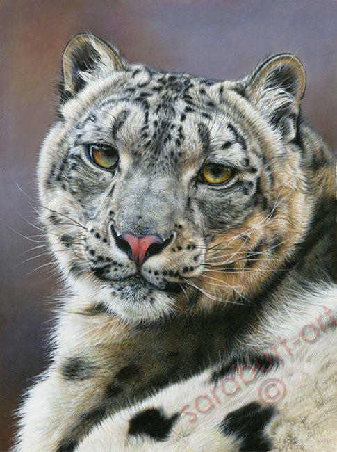 Snow Leopard - Limited Edition Print
