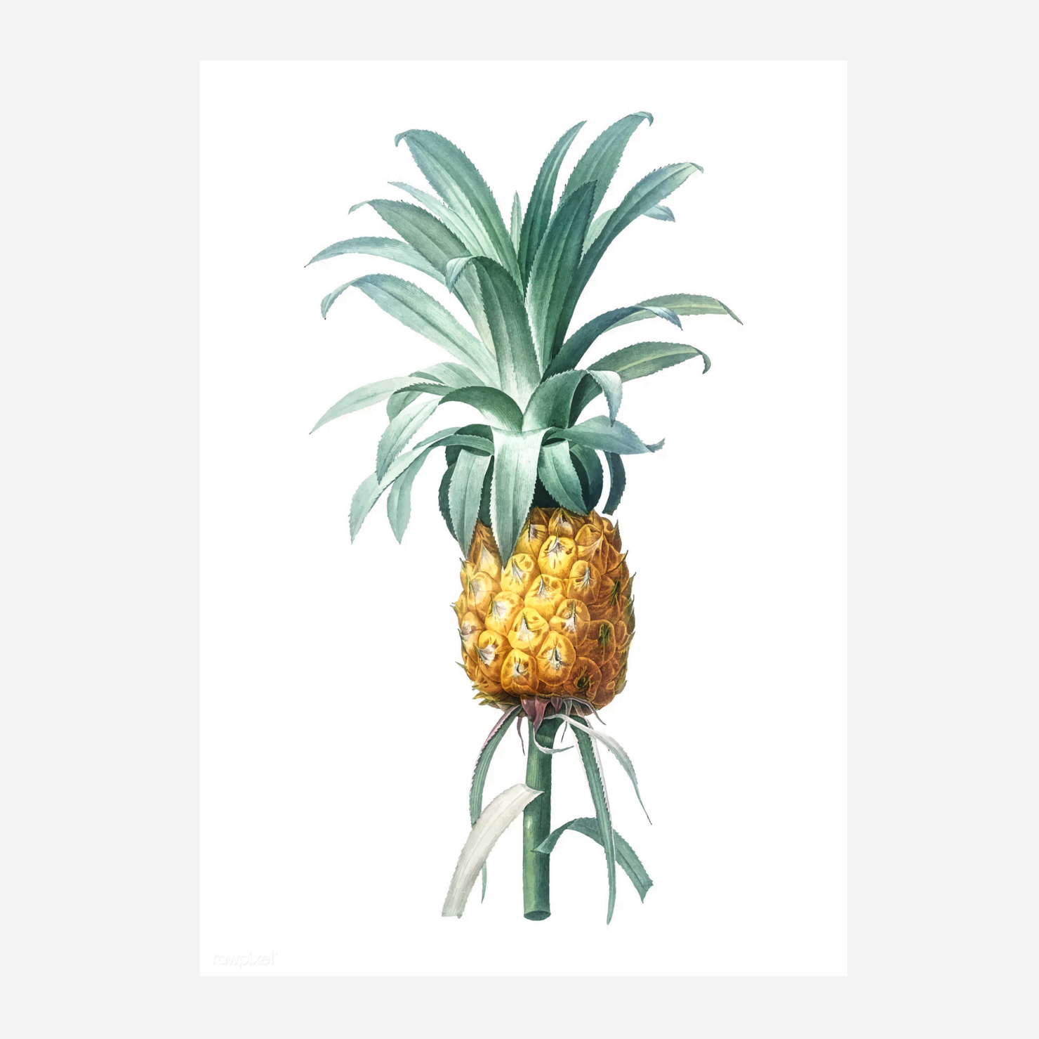 Art Print - Pineapple